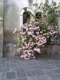 861588ecc39cc9 96 Best flora images