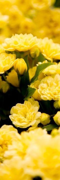 ღ☀Yellow☀ ღ‿ ❀♥♥ 。\ / 。☆ ♥♥ »✿❤❤✿« ☆ ☆ ◦ ● ◦ ჱ ܓ ჱ ᴀ ρᴇᴀcᴇғυʟ ρᴀʀᴀᴅısᴇ ჱ ܓ ჱ ✿⊱╮ ♡ ❊ ** Buona giornata ** ❊ ~ ❤✿❤ ♫ ♥ X ღɱɧღ ❤ ~ Sun 12th April 2015