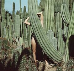 A series of beautiful Images combining human form and the natural world Cacti And Succulents, Cactus Plants, Green Cactus, Verde Vintage, Sending Good Vibes, Amber Valletta, Desert Dream, Desert Days, Desert Life