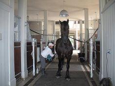 Martha Stewart's horse barn
