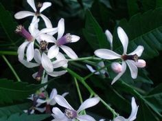 La lista de flores comestibles - Taringa!