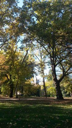 Fall at the park
