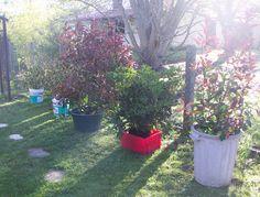 petites plantations