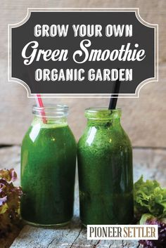 Urban Farming | Grow Your Own Organic Garden Green Smoothie Recipe by Pioneer Settler http://pioneersettler.com/urban-farming-grow-your-own-organic-garden-green-smoothie-recipe/