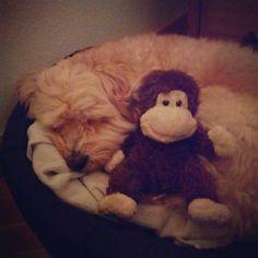 Good night #dogs #puppies #Lucas @ Madrid