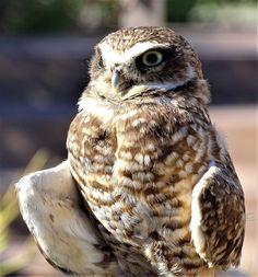 Owled Again~ https://cindyknoke.com/2017/01/14/owled-twice/