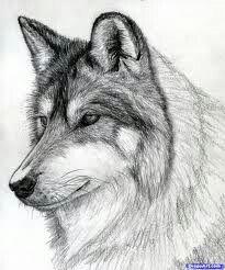31 Mejores Imagenes De Dibujos De Animales A Lapiz Animal Drawings