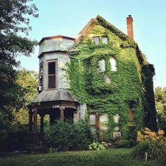 House covered in ivy on Hepburn Avenue, The Highlands, Louisville, Kentucky