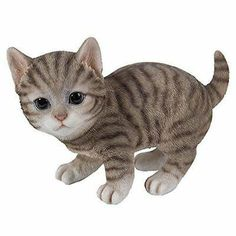 7 Best Grey tabby cats images in 2017 | Cats, Kittens cutest
