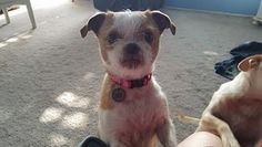 Check out Sissy's profile on AllPaws.com and help her get adopted! Sissy is an…