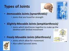 Image result for synarthrotic joints Human Anatomy, Upper Body, How To Make, Image