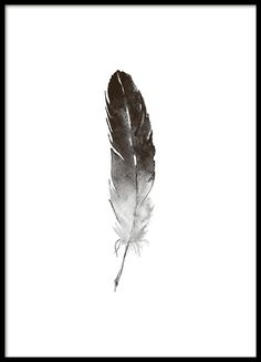 Poster with feather in watercolor . - Poster with feather in watercolor … - Diy Deodorant, Black And White Posters, Black And White Prints, Watercolor Feather, Watercolor Drawing, Watercolor Background, Desenio Posters, Mini Mundo, Gold Poster