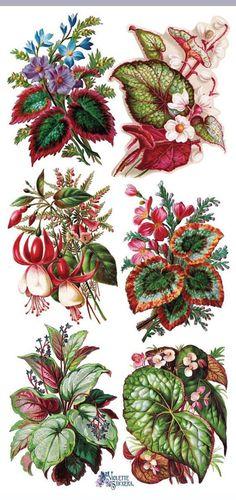 Наклейки-экзотические растения-декупаж-коллаж-смешанной технике-скрапбукинг-четкие наклейки-2 листа-наклейки Виолетта