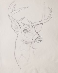 Ideas for art inspiration drawing sketches sketchbooks awesome Cool Art Drawings, Pencil Art Drawings, Art Drawings Sketches, Hipster Drawings, Drawing Ideas, Drawing Step, Deer Drawing Easy, Easy Drawings, Drawings Of Love