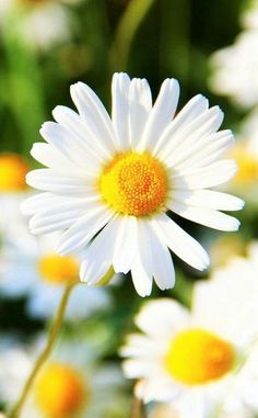 Don't you think daisies are the friendliest flower?