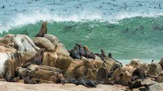 Seals at Skeleton Coast