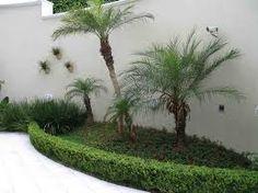 plantas para jardim 2