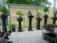 Display Stands Shelving Ideas Bonsai Garden Outdoor Plants Indoor Hydroponics Perennial Ponds Botany