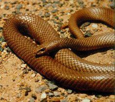 All Australian Animals   The 13 Scariest Australian Animals