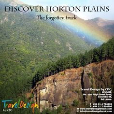 Wander through the valley of dreams full of blooming flowers and wild fauna until you meet the world's end. #Discover #HortonPlains #Flowers #Fuana #WorldsEnd #SriLanka #TravelAsia #ExploreAsia #Asia #Travel #WorldTravel #TravelTheWorld #Wanderlust #WorldPlaces #TravelExperience #TravelDesignbyCDC