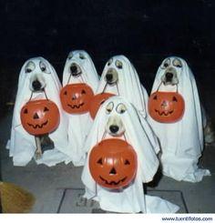 Perros Disfrazados en Hallowen
