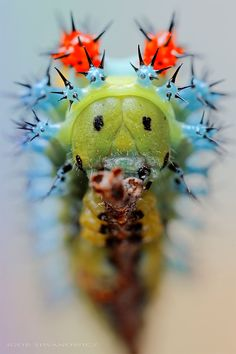 Macro Photos of Caterpillars by Igor Siwanowicz – Inspiration Grid | Design Inspiration