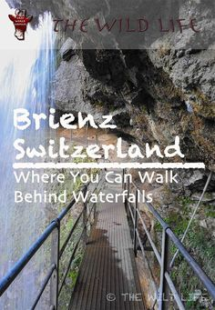 Brienz is a charming little town at the Lake Brienz embedded in the alps of Switzerlands Berner Oberland keeping its Swiss traditions like wood-carving alive. #switzerland #brienz #berneroberland #alps