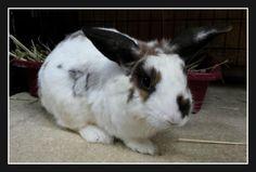 Congrats Cherish! #bunnies #rabbits #adoptdontshop #gainesville