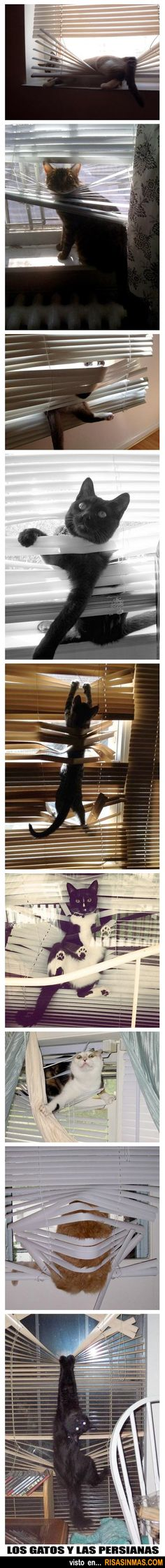 Los gatos y las persianas.<<<<<---I have no idea what that means, but...CATS....in blinds...