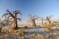 Kubu Island, Botswana
