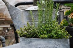 galvanized containers via barnhouse