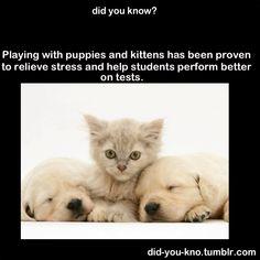 Kittens and puppies helps little children