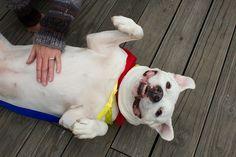 Casper is all smiles at Boardwalking for Pets in Ocean City, MD:)
