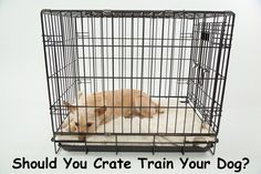 Crate training your dog is one of the first decisions you'll need to make when you get a dog. Here are 5 Steps to Crate Training your Dog Successfully. Puppies Tips, Best Puppies, Best Dogs, Dog Crate Tray, Puppy Crate, Training Your Puppy, Dog Training Tips, Potty Training, Leash Training