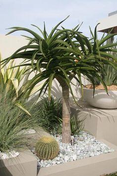 Succulent Landscaping, Landscaping Plants, Front Yard Landscaping, Succulents Garden, Landscaping Ideas, Xeriscaping, Contemporary Garden, Cool Plants, Landscape Design