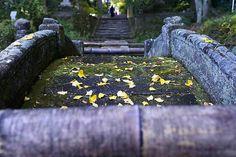太鼓橋に見る小さい秋ですね
