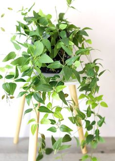 Find realistic artificial plants for your home. Shop faux plant favorites such as eucalyptus, fern, fiddle leaf, and more. Afloral is the go to place for artificial trendy house plants that are hassle free, no water required! Fake Plants Decor, House Plants Decor, Hanging Plants, Plant Decor, Hanging Baskets, Real Plants, Hanging Gardens, Inside Plants, Artificial Indoor Plants