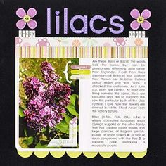 Lilacs are always prettier in the garden.