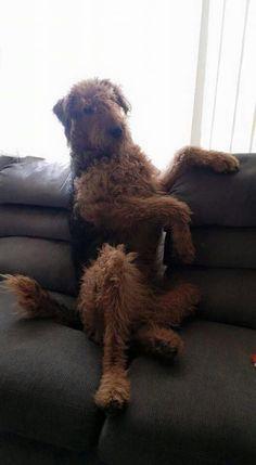 Sitting, like a BOSS!