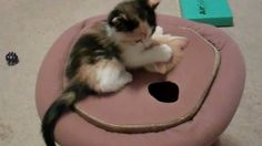 ★REAL Kitty Whack-A-Mole! :D★ Kittens play with cute toy - Cutest kitten video ever! Ok for children