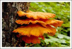 mushroom by Robert Voors