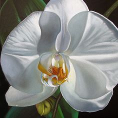 """Phalaenopsis 24x24"" - Original Fine Art for Sale - © M Collier"
