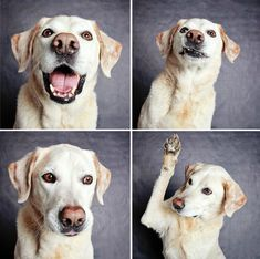 Take a group of dogs aching for affection and a home to call their own. Add one photo booth and a professional photographer who loves animals. These adorable photos are the results. Guinnever Shust...