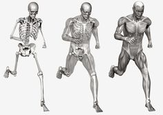 bones and muscle