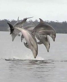 #dolphinlove #dolphins