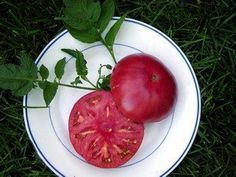 30 Brandywine Tomato Seeds Vegetable Heirloom Organic by Seeds and Things, http://www.amazon.com/dp/B0033HO0ZS/ref=cm_sw_r_pi_dp_N3znqb0P2GS17