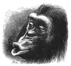 Disappointment  Expression of the Emotions Figure 18 - The Expression of the Emotions in Man and Animals by Charles Darwin - Wikipedia
