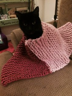 Poncho for my daughter, being modeled by Gato.