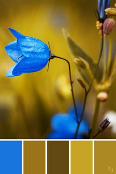 ZJ Colour Palette 18 #colourpalette #colourinspiration