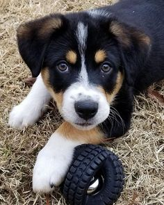 Beautiful puppy and his toy #dogsofinstagram #puppiesofinstagram #puppy #cutedog #playtime #dogs